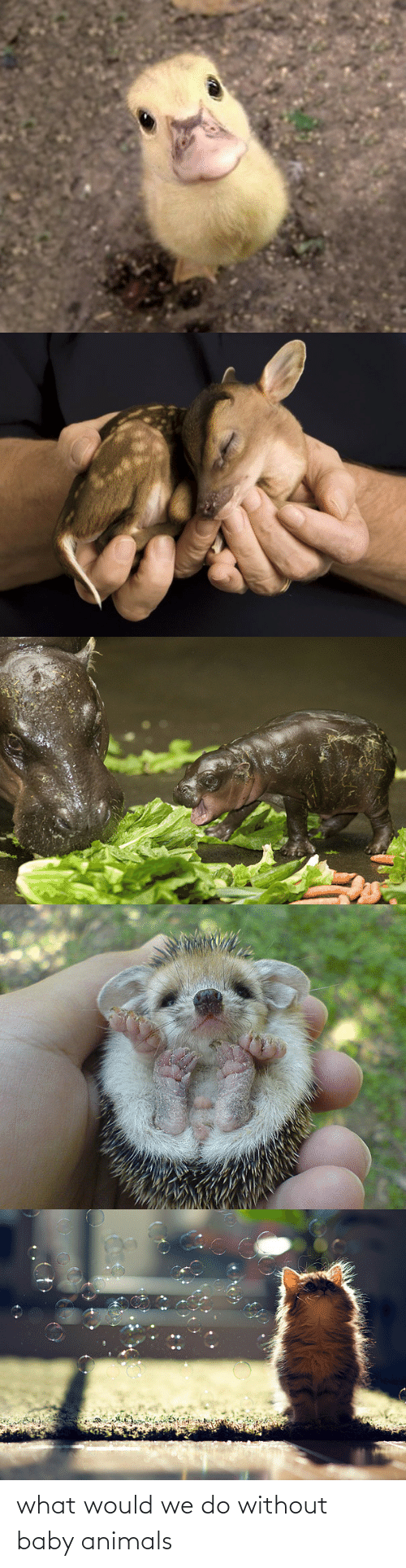 We Do: what would we do without baby animals