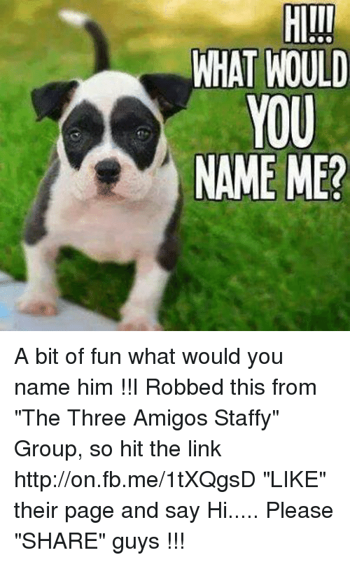 """three amigos: WHAT WOULD  YOU  NAME ME? A bit of fun what would you name him !!I Robbed this from """"The Three Amigos Staffy"""" Group, so hit the link http://on.fb.me/1tXQgsD """"LIKE"""" their page and say Hi..... Please """"SHARE"""" guys 【ツ】!!!"""