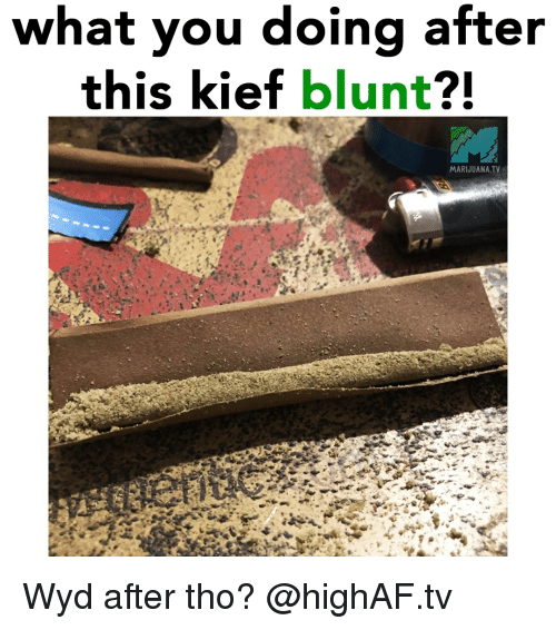 Weed, Wyd, and Marijuana: what you doing after  this kief blunt?!  MARIJUANA.TV Wyd after tho? @highAF.tv