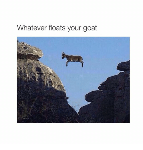 Goat, Girl Memes, and Yours: Whatever floats your goat