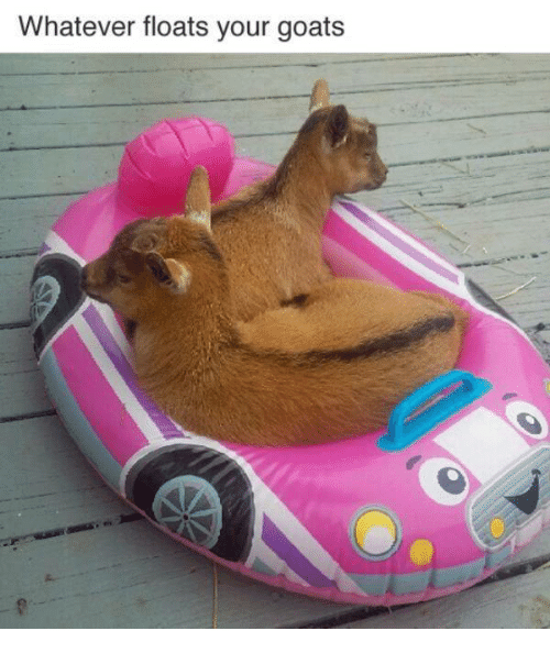 Memes, Goat, and 🤖: Whatever floats your goats