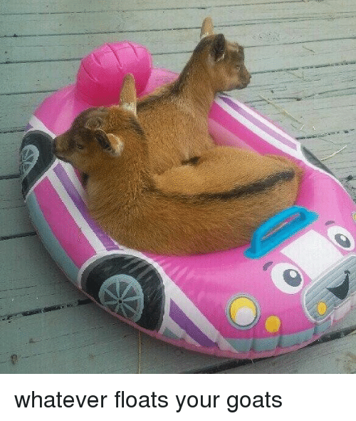 Goat, Girl Memes, and Goats: whatever floats your goats