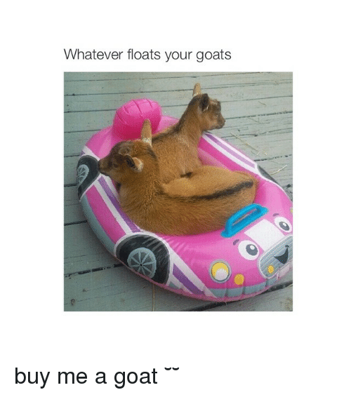Goat, Girl Memes, and Yours: Whatever floats your goats buy me a goat ˘◡˘