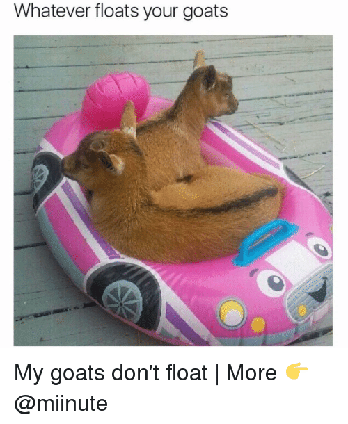 Funny, Goat, and Goats: Whatever floats your goats My goats don't float   More 👉 @miinute