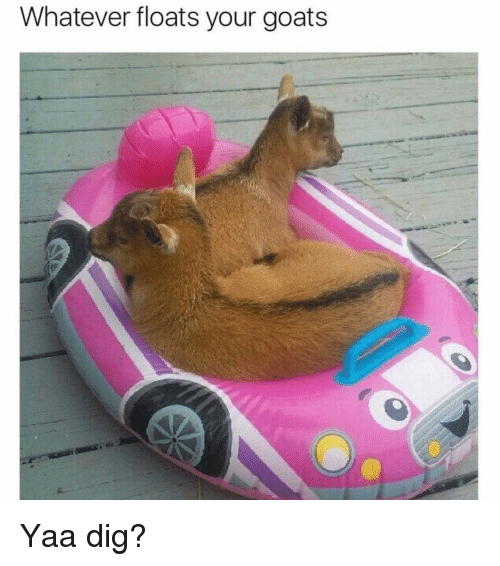 Funny, Goat, and Dig: Whatever floats your goats Yaa dig?