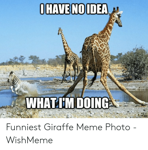 Wishmeme: WHATIM DOING Funniest Giraffe Meme Photo - WishMeme