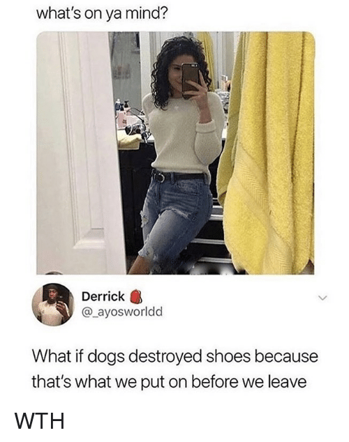 Dogs, Memes, and Shoes: what's on ya mind?  Derrick  @_ayosworldd  What if dogs destroyed shoes because  that's what we put on before we leave WTH