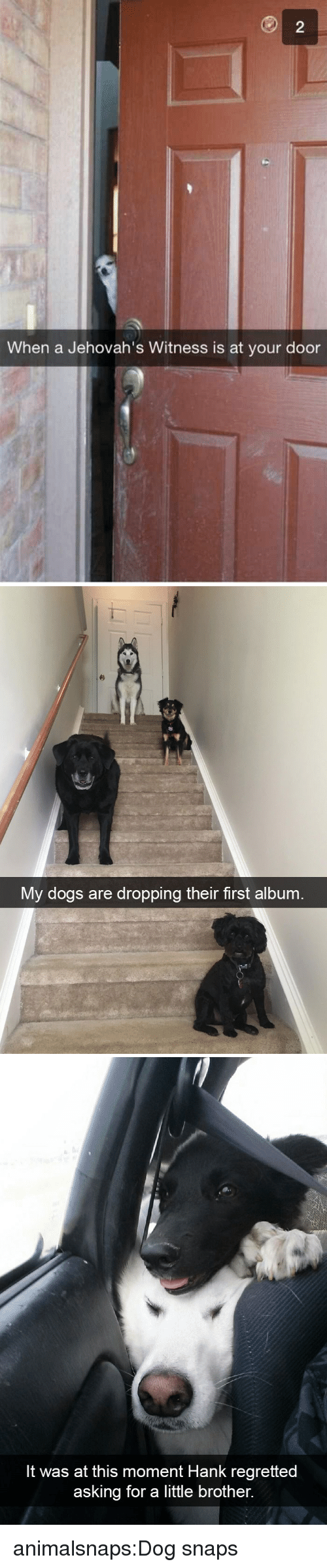 Dogs, Target, and Tumblr: When a Jehovah's Witness is at your door   My dogs are dropping their first album   It was at this moment Hank regretted  asking for a little brother. animalsnaps:Dog snaps