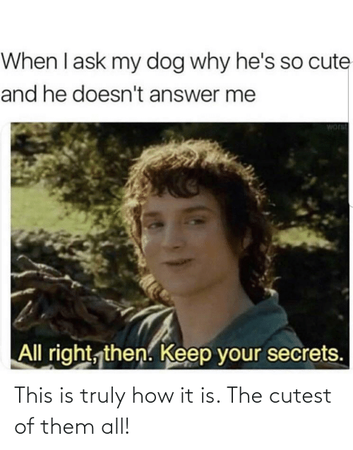 Truly: When I ask my dog why he's so cute  and he doesn't answer me  worst  All right, then. Keep your secrets. This is truly how it is. The cutest of them all!