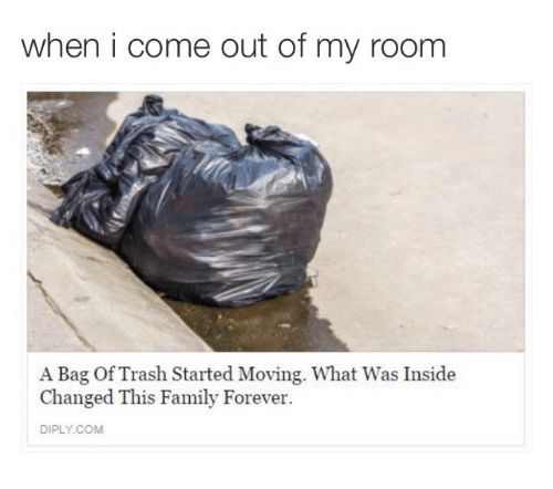 Out Of My Room: when i come out of my room  A Bag Of Trash Started Moving. What Was Inside  Changed This Family Forever  DIPLY.COM