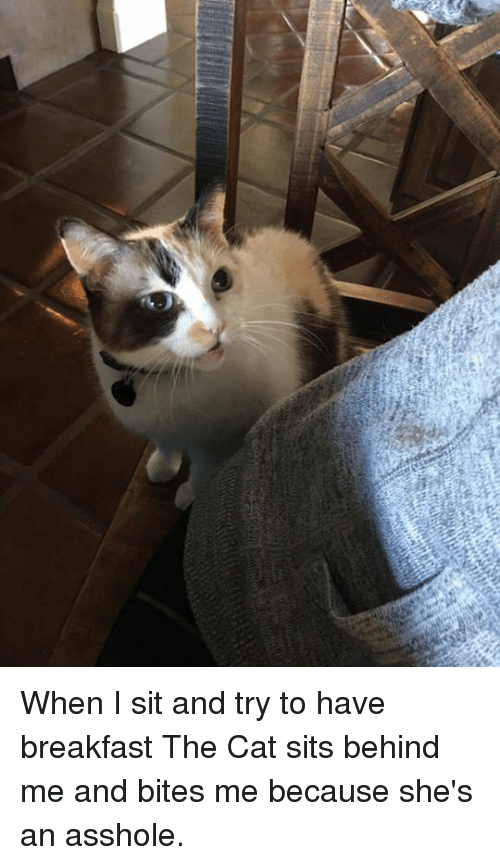 Dank, Breakfast, and Asshole: When I sit and try to have breakfast The Cat sits behind me and bites me because she's an asshole.