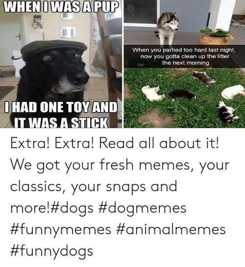 Dogs, Fresh, and Memes: WHEN I WAS A PUP  When you partied too hard last night,  now you gotta clean up the litter  the next morning  OHAD ONE TOY AND  IT WAS A STICK Extra! Extra! Read all about it! We got your fresh memes, your classics, your snaps and more!#dogs #dogmemes #funnymemes #animalmemes #funnydogs