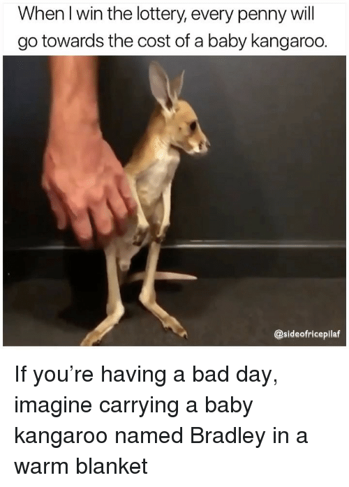 Bad, Bad Day, and Lottery: When I win the lottery, every penny will  go towards the cost of a baby kangaroo.  @sideofricepilaf If you're having a bad day, imagine carrying a baby kangaroo named Bradley in a warm blanket