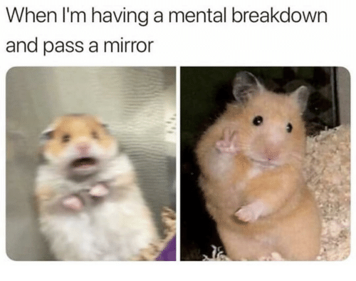 Funny, Mirror, and Breakdown: When I'm having a mental breakdown  and pass a mirror