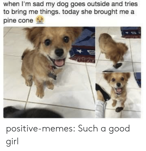 Memes, Tumblr, and Blog: when I'm sad my dog goes outside and tries  to bring me things. today she brought me a  pine cone positive-memes:  Such a good girl