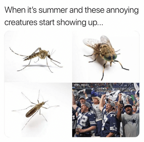 Memes, Nfl, and Summer: When it's summer and these annoying  creatures start showing up...  ONFL MEMES