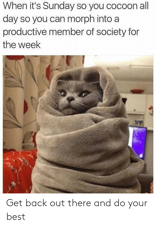 Best, Sunday, and Back: When it's Sunday so you cocoon all  day so you can morph into a  productive member of society for  the week Get back out there and do your best