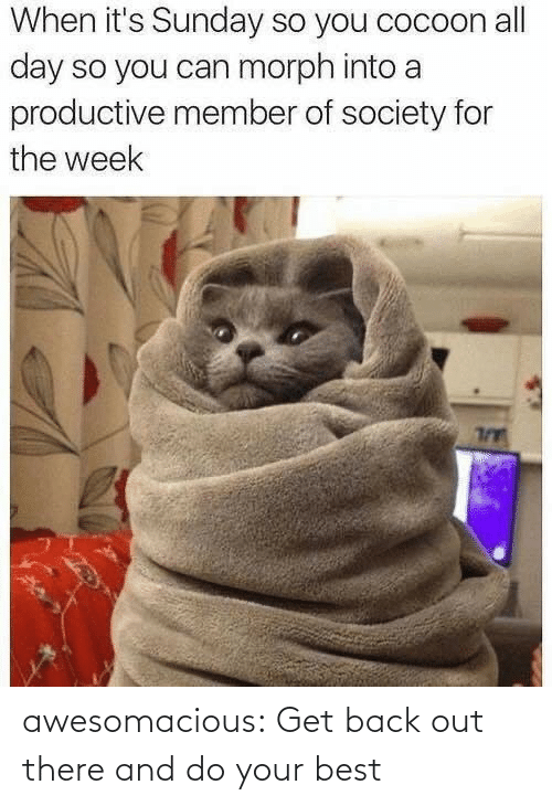 Tumblr, Best, and Blog: When it's Sunday so you cocoon all  day so you can morph into a  productive member of society for  the week awesomacious:  Get back out there and do your best