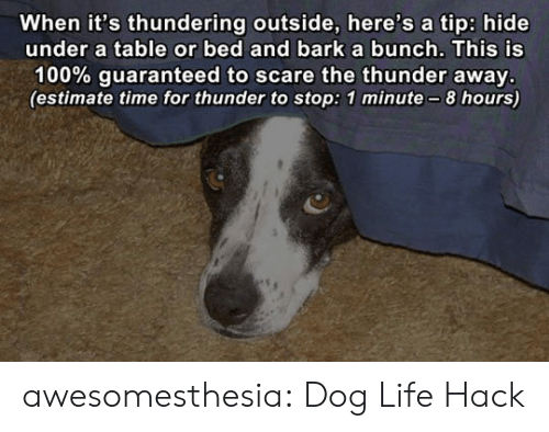 Life, Scare, and Tumblr: When it's thundering outside, here's a tip: hide  under a table or bed and barka bunch. This is  100% guaranteed to scare the thunder away.  (estimate time for thunder to stop: 1 minute-8 hours) awesomesthesia:  Dog Life Hack