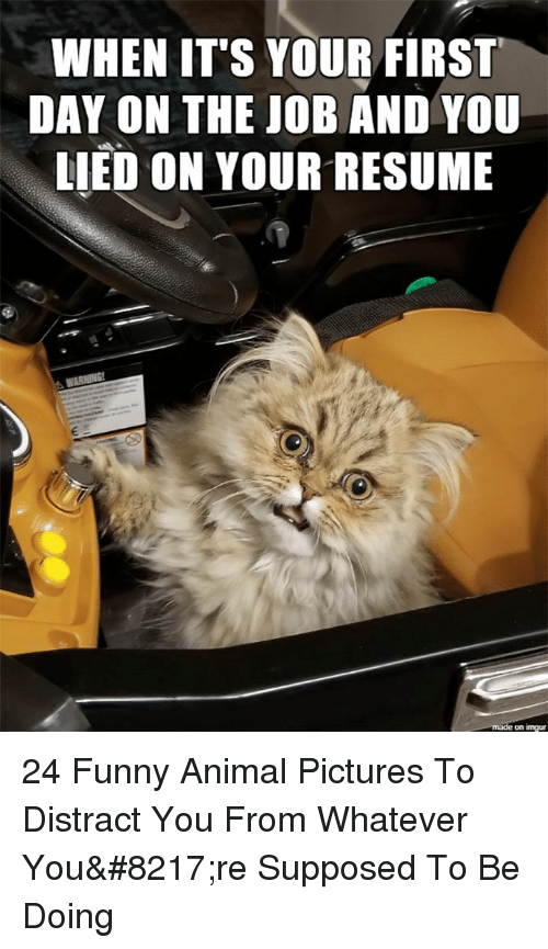 first day on the job: WHEN IT'S YOUR FIRST  DAY ON THE JOB AND YOU  LIED ON YOUR RESUME  on imgu 24 Funny Animal Pictures To Distract You From Whatever You're Supposed To Be Doing