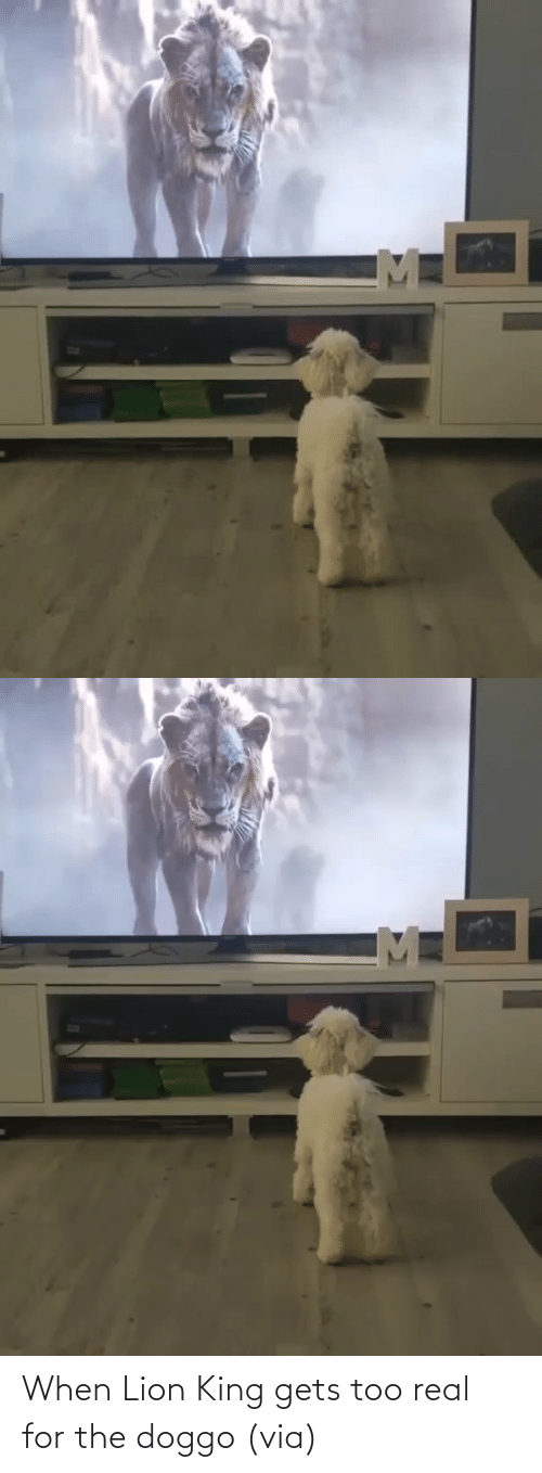 Lion: When Lion King gets too real for the doggo (via)