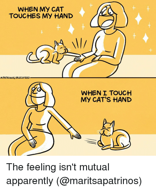 Apparently, Cats, and Memes: WHEN MY CAT  TOUCHES MY HAND  MPATRİ NOS/ BUZZFEED  WHEN I TOUCH  MY CAT'S HAND The feeling isn't mutual apparently (@maritsapatrinos)