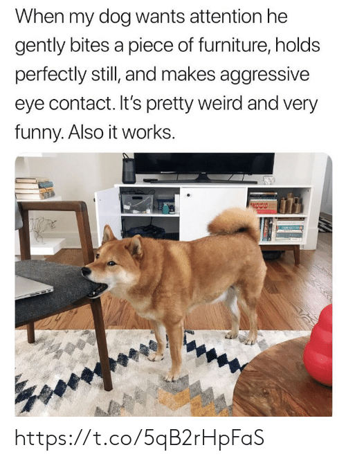 very funny: When my dog wants attention he  gently bites a piece of furniture, holds  perfectly still, and makes aggressive  eye contact. It's pretty weird and very  funny. Also it works. https://t.co/5qB2rHpFaS