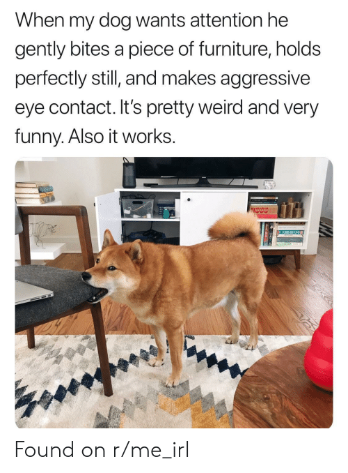 very funny: When my dog wants attention he  gently bites a piece of furniture, holds  perfectly still and makes aggressive  eye contact. It's pretty weird and very  funny. Also it works. Found on r/me_irl
