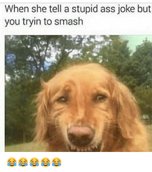 stupider: When she tell a stupid ass joke but  you tryin to smash 😂😂😂😂😂