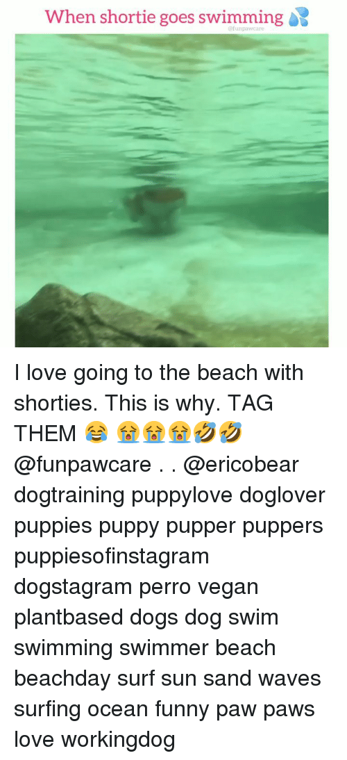 swimmer: When shortie goes swimming  @funpawcare I love going to the beach with shorties. This is why. TAG THEM 😂 😭😭😭🤣🤣 @funpawcare . . @ericobear dogtraining puppylove doglover puppies puppy pupper puppers puppiesofinstagram dogstagram perro vegan plantbased dogs dog swim swimming swimmer beach beachday surf sun sand waves surfing ocean funny paw paws love workingdog