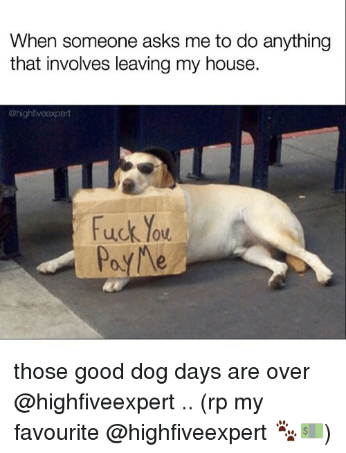 Memes, 🤖, and Dog Days: When someone asks me to do anything  that involves leaving my house.  @high fiveexpert  Fuck You  Pay Me those good dog days are over @highfiveexpert .. (rp my favourite @highfiveexpert 🐾💵)