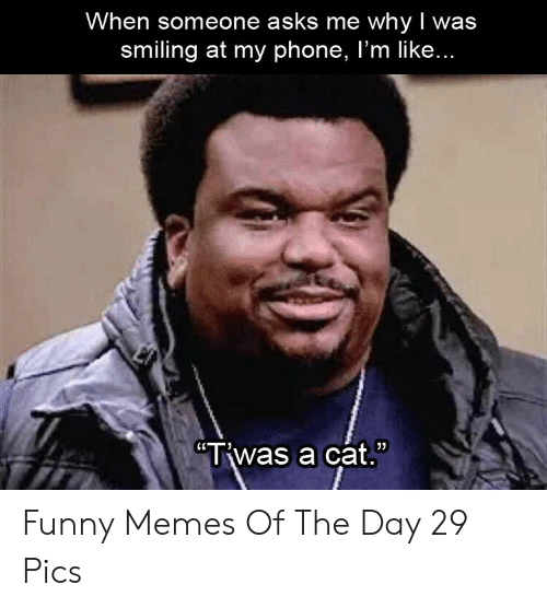 "memes of the day: When someone asks me whyI was  smiling at my phone, I'm like...  ""Twas a cat. Funny Memes Of The Day 29 Pics"