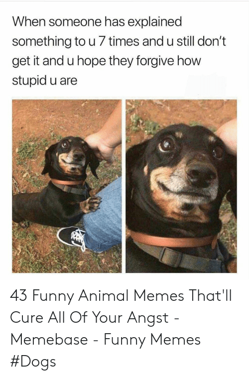 memebase: When someone has explained  something to u 7 times and u still don't  get it and u hope they forgive how  stupid u are 43 Funny Animal Memes That'll Cure All Of Your Angst - Memebase - Funny Memes #Dogs