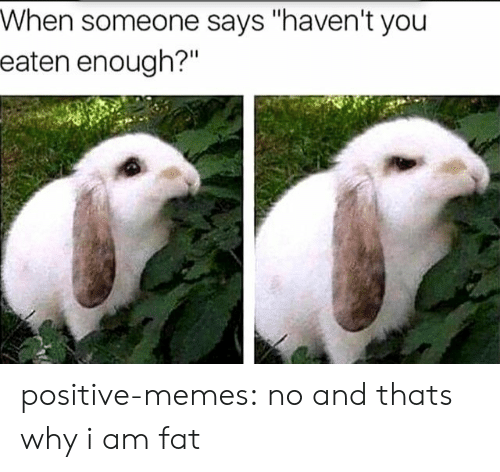 """Memes, Tumblr, and Blog: When someone says """"haven't you  eaten enough?""""  Il positive-memes:  no and thats why i am fat"""