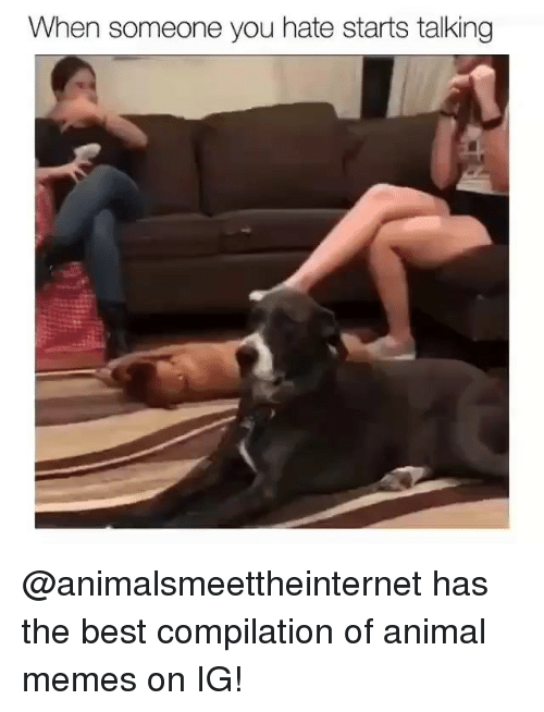 compilation: When someone you hate starts talking @animalsmeettheinternet has the best compilation of animal memes on IG!
