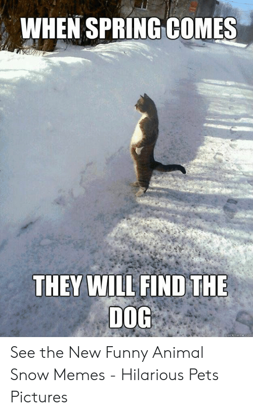 Funny, Memes, and Animal: WHEN SPRING COMES  THEY WILL FIND THE  DOG  quickmeme.com See the New Funny Animal Snow Memes - Hilarious Pets Pictures