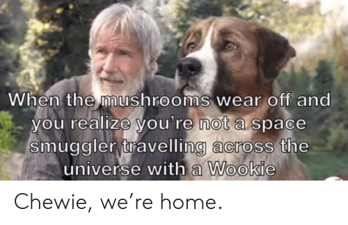 Travelling: When the mushrooms wear off and  you realize you're not a space  smuggler travelling across the  universe with a Wookie Chewie, we're home.