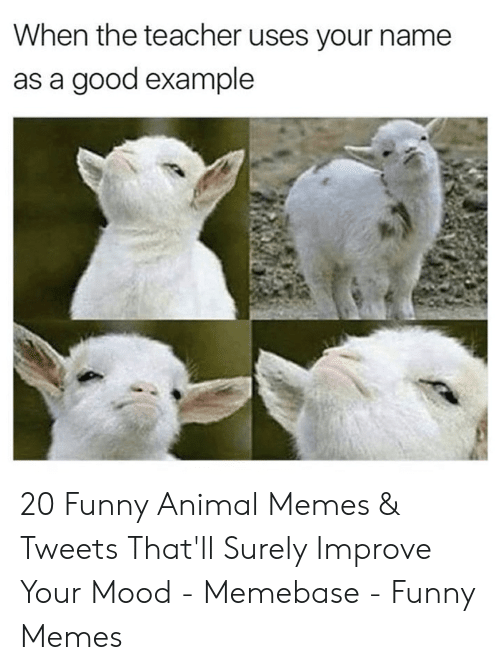 funny animal memes: When the teacher uses your name  as a good example 20 Funny Animal Memes & Tweets That'll Surely Improve Your Mood - Memebase - Funny Memes