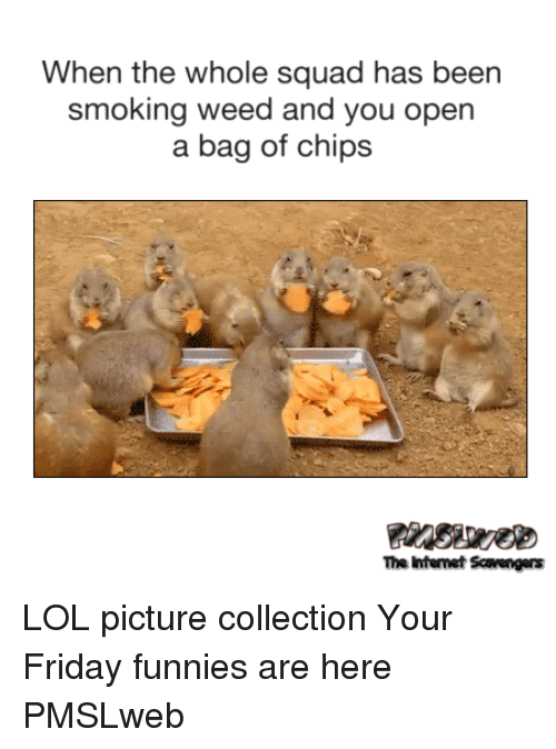 When The Whole Squad: When the whole squad has been  smoking weed and you open  a bag of chips  The Intemet Scavengers <p>LOL picture collection  Your Friday funnies are here  PMSLweb </p>