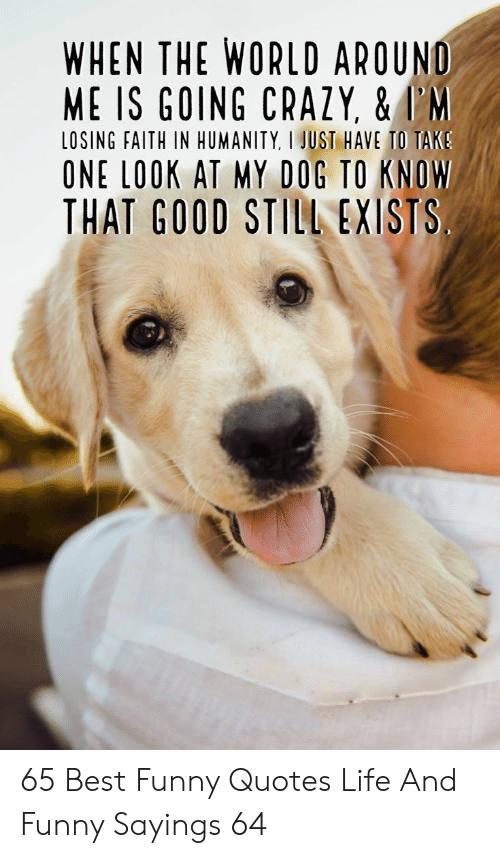 sayings: WHEN THE WORLD AROUND  ME IS GOING CRAZY, &I'M  LOSING FAITH IN HUMANITY, I JUST HAVE TO TAKS  ONE LOOK AT MY DOG TO KNOW  THAT GOOD STILL EXISTS 65 Best Funny Quotes Life And Funny Sayings 64