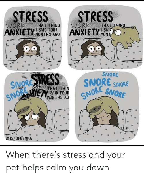 stress: When there's stress and your pet helps calm you down