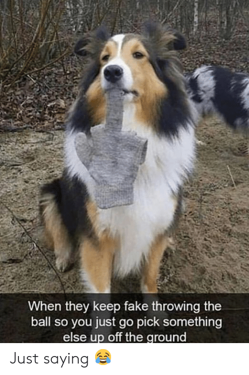 Fake, Grumpy Cat, and Something Else: When they keep fake throwing the  ball so you just go pick something  else up off the ground  CVET Just saying 😂