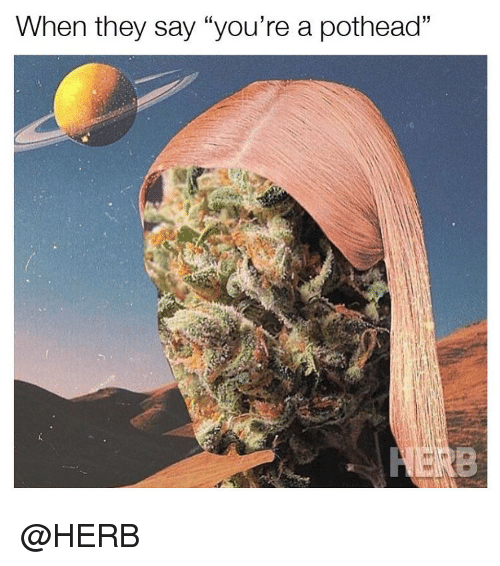 """Weed, Marijuana, and Pothead: When they say """"you're a pothead"""" @HERB"""