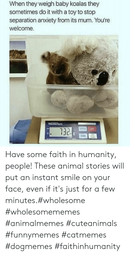 funnymemes: When they weigh baby koalas they  sometimes do it with a toy to stop  separation anxiety from its mum. You're  welcome.  Wedserbun  732 Have some faith in humanity, people! These animal stories will put an instant smile on your face, even if it's just for a few minutes.#wholesome #wholesomememes #animalmemes #cuteanimals #funnymemes #catmemes #dogmemes #faithinhumanity