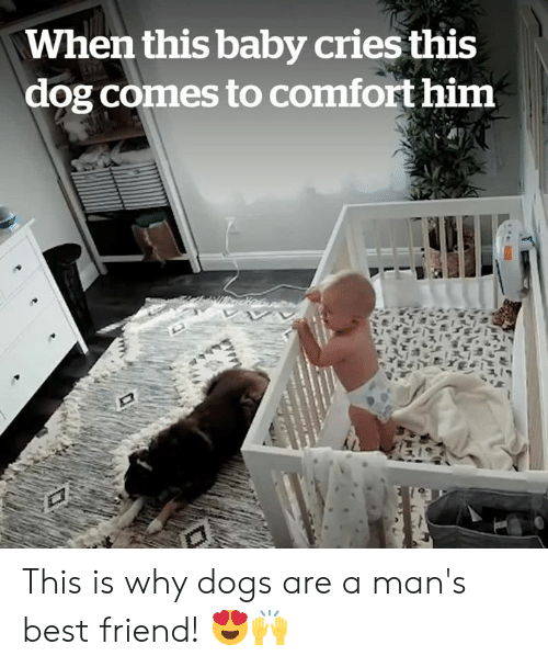 comfort: When this baby cries this  dog comes to comfort him This is why dogs are a man's best friend! 😍🙌
