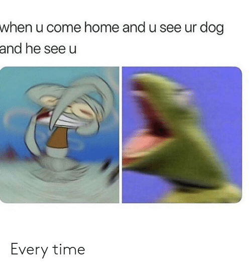 Memes, Home, and Time: when u come home and u see ur dog  and he see u Every time