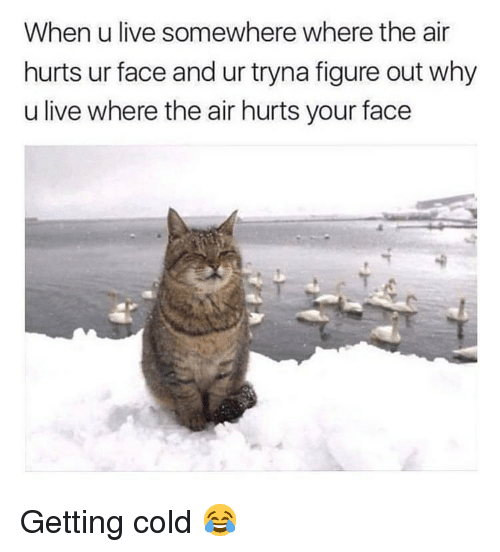 Memes, Live, and Cold: When u live somewhere where the air  hurts ur face and ur tryna figure out why  u live where the air hurts your face Getting cold 😂