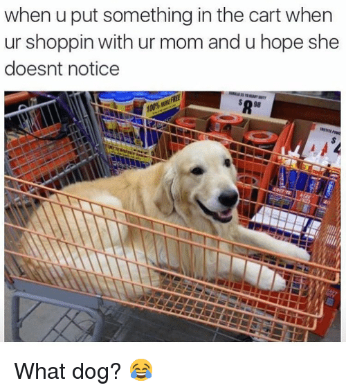 Memes, Hope, and Mom: when u put something in the cart when  ur shoppin with ur mom and u hope she  doesnt notice What dog? 😂