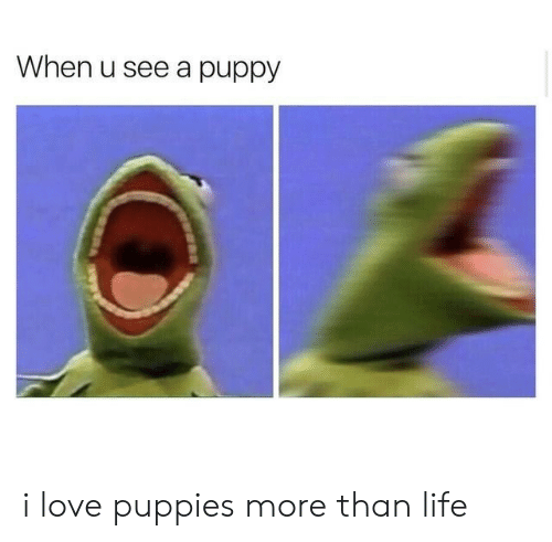 Life, Love, and Puppies: When u see a puppy i love puppies more than life