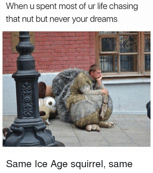 Funny, Life, and Ice Age: When u spent most of ur life chasing  that nut but never your dreams Same Ice Age squirrel, same